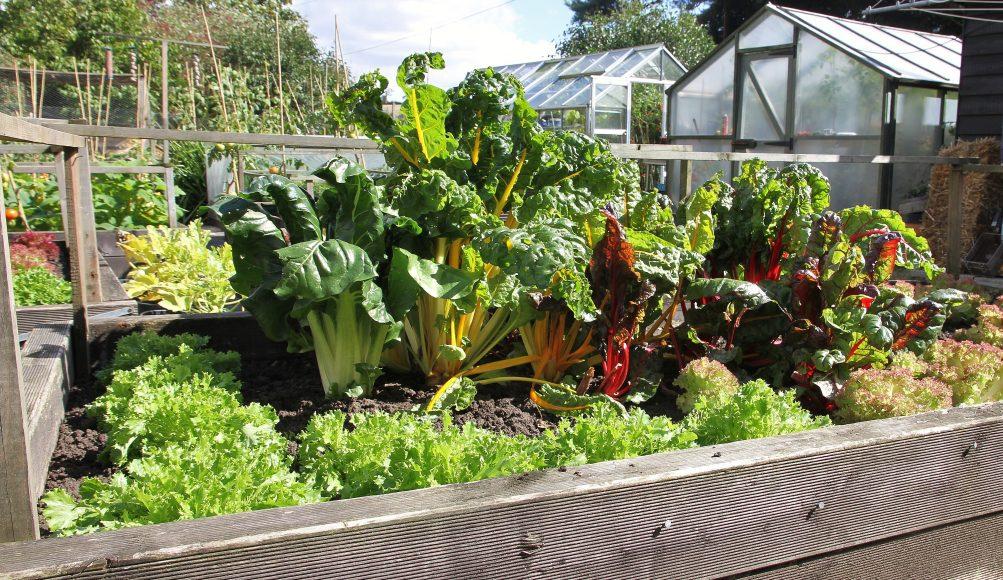 Kitchen Gardens Suffolk