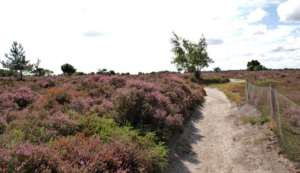Local Walks in Suffolk